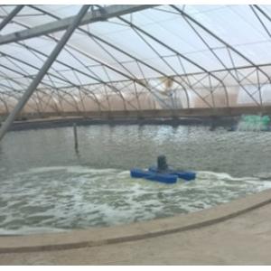 Hệ thống-thiết bị cấp oxy nuôi trồng thủy sản
